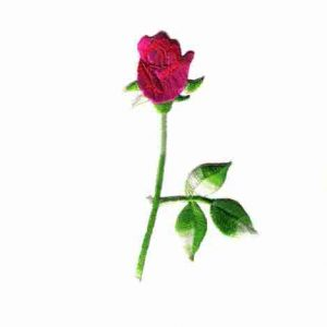 Long Stemmed Red Rose Iron On Floral Applique